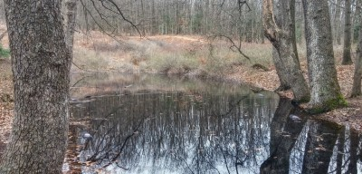 blogVernalPool