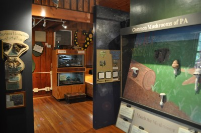 The Discovery Room at Shaver's Creek