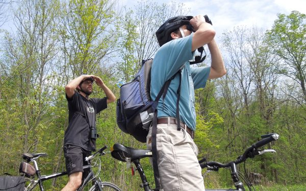 Two men search for birds with binoculars