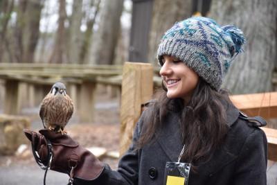 Traveling Naturalist - Carli Dinsmore Kestrel