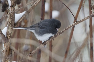 Titmice, Juncos, and Cardinals, oh my! | Shaver's Creek
