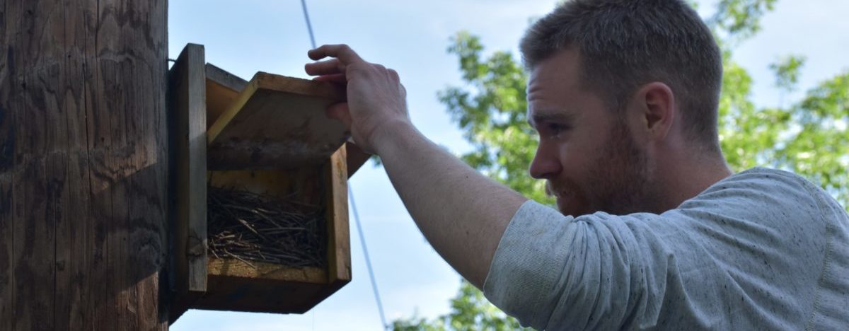 A volunteer inspects a nest box