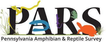 Pennsylvania Amphibian and Reptile Survey