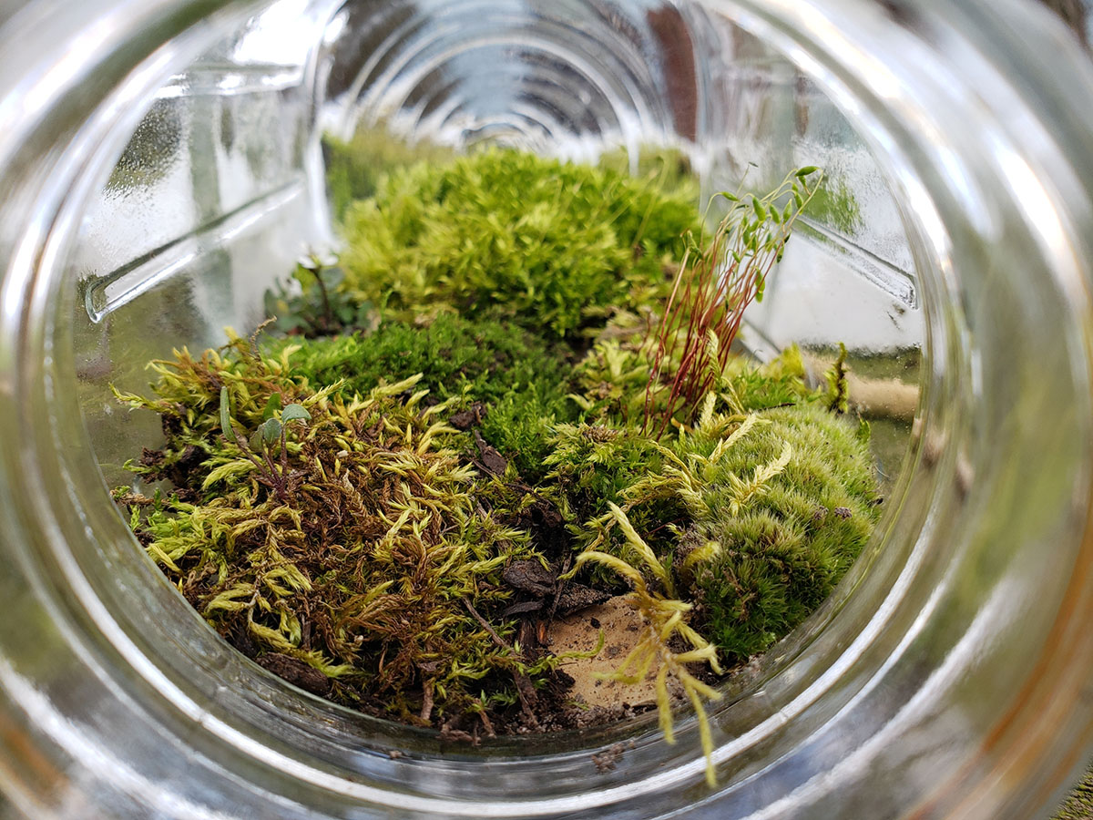 Small stones, a layer of dirt, and a layer of moss in a Mason jar