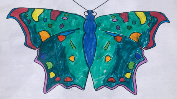 Eastern Comma butterfly from coloring book