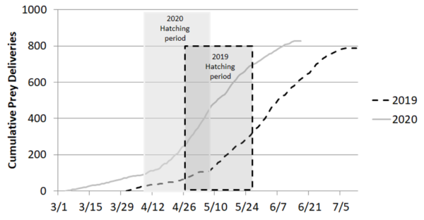 Graph of Cumulative Prey Deliveries during a barn owl hatching period