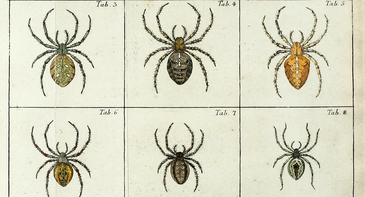 Illustration of spiders